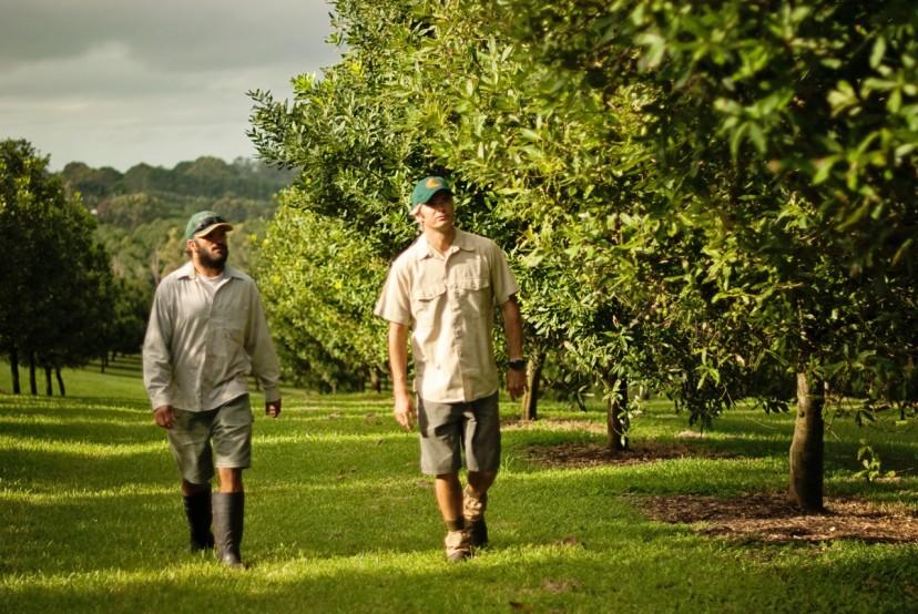 オーストラリアのマカダミア農家