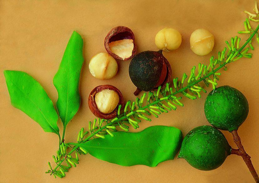 殻付きマカダミアナッツの実、カーネル(白い部分)、花