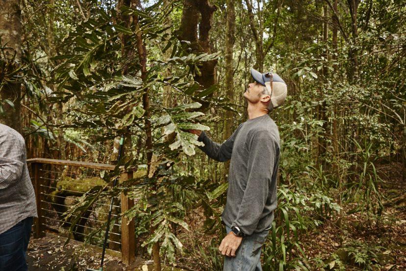 マカダミアナッツ農園の熱帯雨林生態系